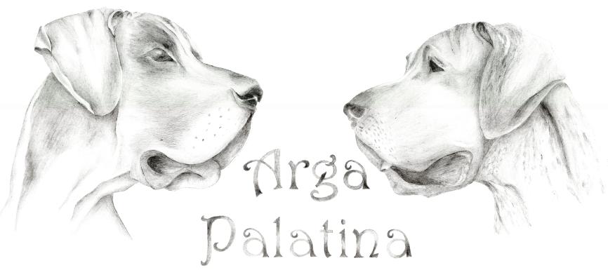 Arga-Palatina-Doggen